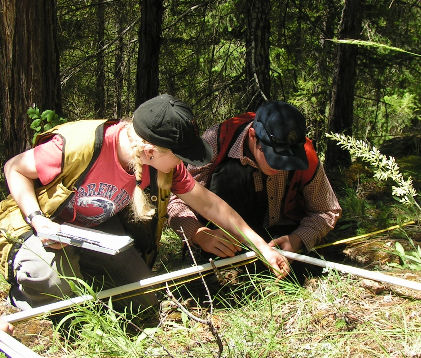 Lomakatsi field technicians monitoring herbaceous understory plants as part of a forest restoration project in the Tiller Ranger District.""
