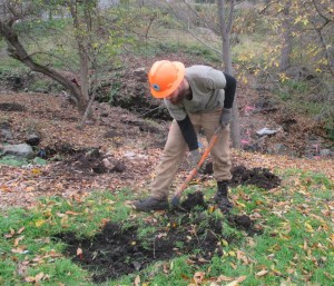 Prior to students planting native trees and shrubs, Lomakatsi crews manually removed blackberries along the creeks, cleared planting spots, and dug planting holes in the soil.