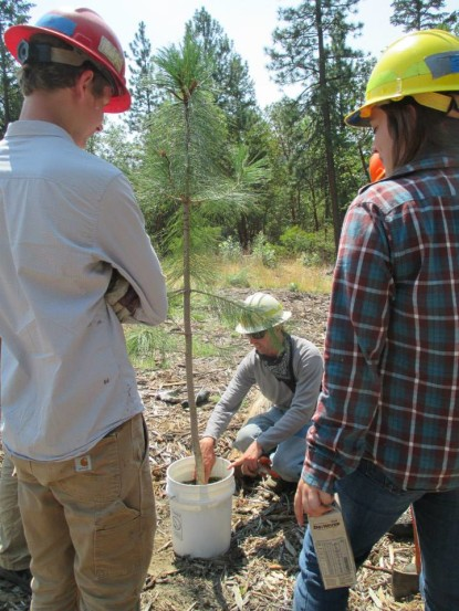 Under the guidance of Lomakatsi's professional workforce trainers and environmental educators, students learned about natural resource management as they implemented ecological restoration projects within the Ashland Watershed and adjacent lands. John Cymore, Lomakatsi's Lead Restoration Technician and Workforce Trainer, is shown here explaining how to properly plant a ponderosa pine.