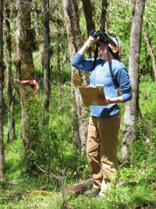 A field biologist from the Klamath Bird Observatory performs bird counts on one of Lomakatsi's oak restoration projects.