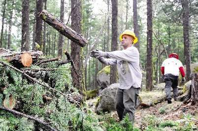 Shane Parazoo works during a thinning project Thursday outside of Ashland. Julia Moore, Daily Tidings, 6-22-13