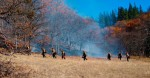 Colestin 11-1-13, An ignition crew carefully burns a meadow in preparation for future native grass seeding