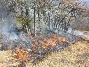 Colestin 11-1-13, Low intensity fire burns through oak woodlands