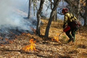 Colestin 11-1-13, Prescribed fire reduces encroaching conifers by consuming seedlings