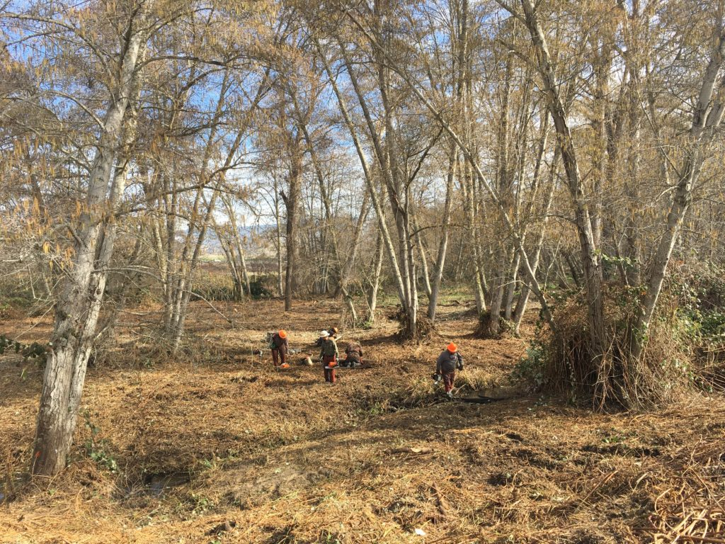 The Lomakatsi restoration forestry crew takes a well-earned break in the newly cleared Bear Creek stream corridor. Continued maintenance as well as planting of native species will be required to keep the area from being retaken by invasive blackberries.