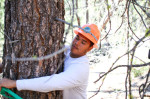 Domonic Johnson marks a tree Thursday in the forests north of Beatty, Dave Martinez, Herald and News, July 26, 2014