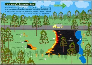 Anatomy of a prescribed burn
