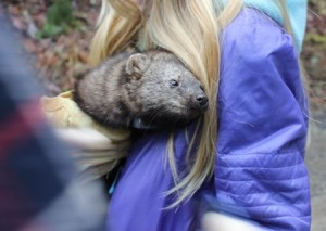 A Pacific Fisher found in the Ashland Watershed