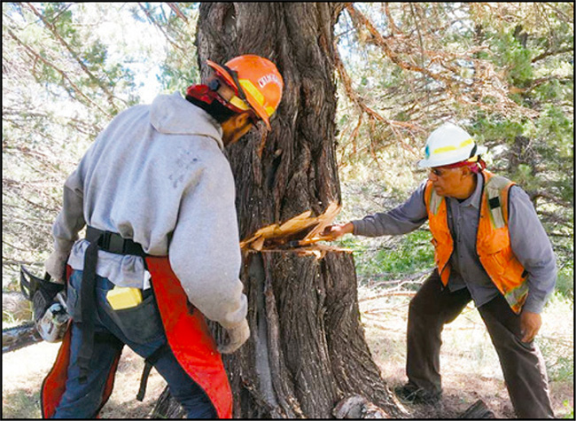 A key component of the juniper thinning project on the Fort Bidwell Reservation was for nonprofit ecological restoration organization Lomakatsi Restoration Project to provide tribal workforce development, training them in skills needed for ecological restoration.
