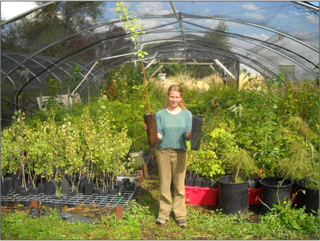 Nurseries - Niki holding trees, pptx photo