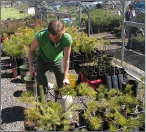 Nurseries - Niki watering trees, pptx photo
