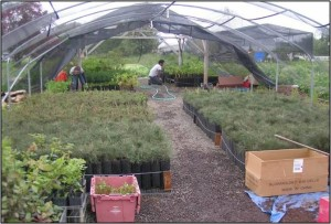 Nurseries, large view of, pptx photo