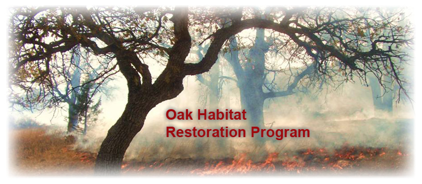 Oak Habitat Restoration Program