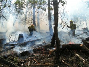 Prescribed fire: broadcast burn in a thinned mixed conifer/hardwood stand