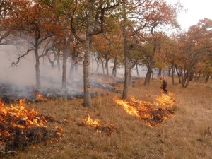Lomakatsi fire crew implements prescribed fire plan.