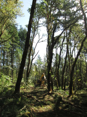 At the Coburg Preserve in the Willamette Valley, encroaching Douglas fir is thinned, removed and sent to local mills.