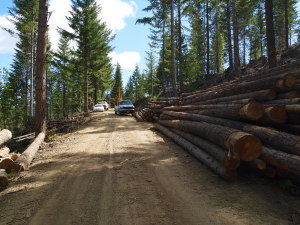Restoration by-products (saw logs) removed as part of the Pepperbuck Project in Josephine County, Oregon.