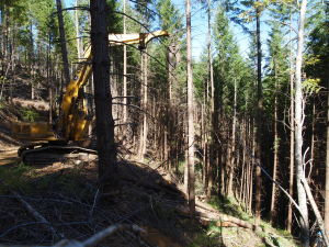 "A log loader ""tong thrower"" is used to suspend logs as part of the Hope Mountain Stewardship Project."