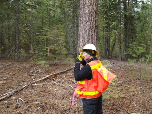 Lomakatsi's Restoration Design Specialist uses a range finder to measure inventory plot distances.