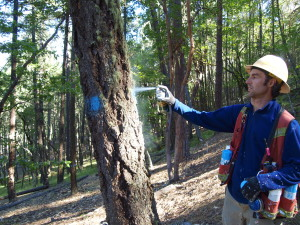 As part of the Ashland Forest Resiliency Stewardship Project, Lomakatsi's forestry technicians mark trees for removal.