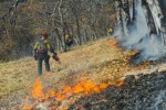 RCPP, fb page, workers burning under oaks