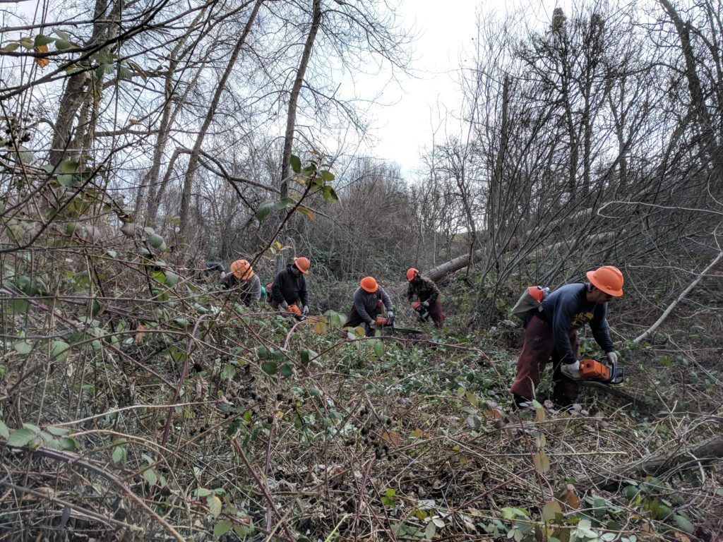Lomakatsi's restoration forestry crew utilized manual techniques to cut back six acres of invasive Himalayan blackberry along the banks of Bear Creek in Ashland.