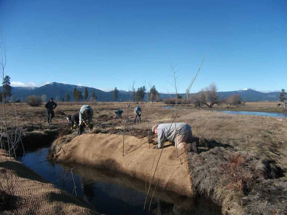 Wood River, Native Willow planting and streambank stabilization