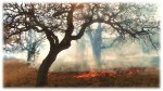fire under oaks, pptx Picture1