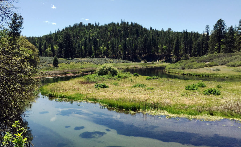 Hat Creek in the upper Sacramento River watershed. Restoring redband trout habitat and establishing cultural plants, in partnership with tribal community and California Trout.